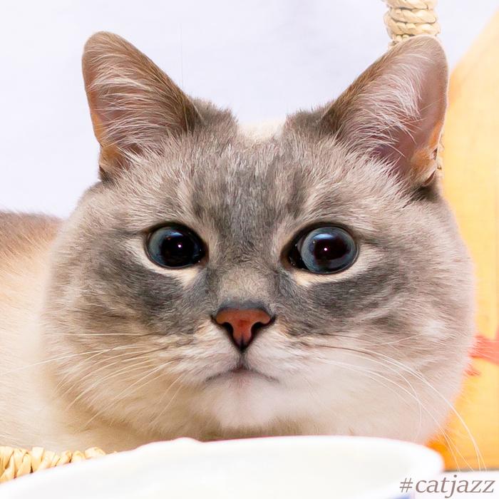 Кот Джаз Кот Джаз, Домашние животные, Милота, Кот