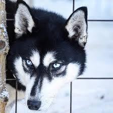 У откусивших руку ребенку собак, нашлись тысячи защитников. Собаки и люди, Происшествие, Собака, Негатив, Lenta ru, Новости, Домашние животные