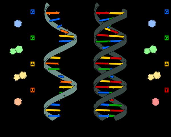 Редактирование генома. Просто о сложном. Биология, ДНК, Редактирование генома, Crispr-Cas9, Наука, Биотехнологии, Длиннопост