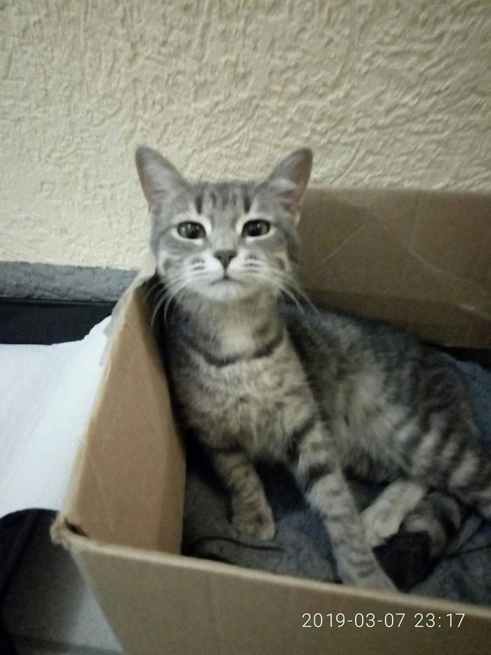 Котейка ищет добрые ручки Кот, Помощь, Без рейтинга, Длиннопост, Самара, В добрые руки, Ищу дом