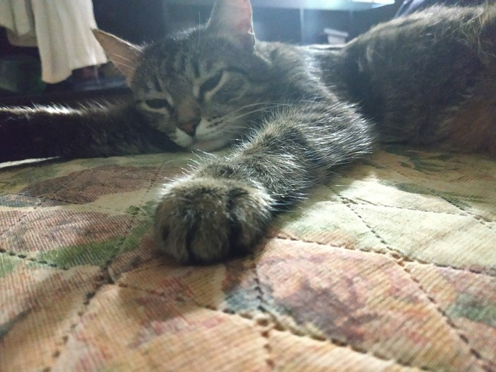 Просто кот с просто лапой