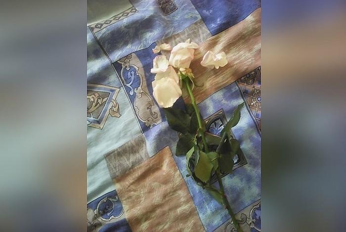 Обманули ребенка: флористы продали мальчику розу с опавшими лепестками 8 марта, Цветы, Роза, Цветочный магазин, Мальчик, Обман, Новосибирск, Негатив