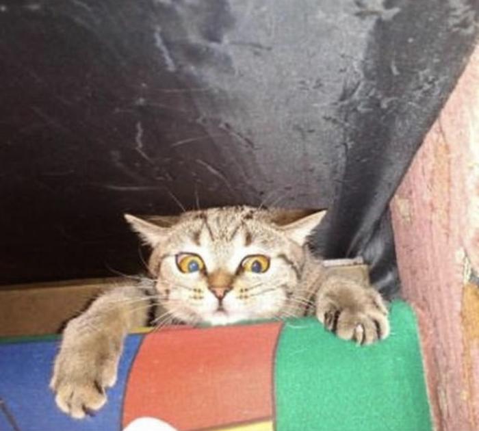 Спасити! Кот, Домашние животные, Диван