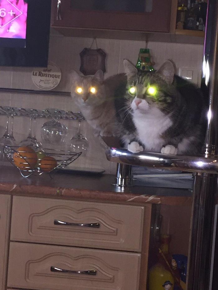 Коты инопланетяне.