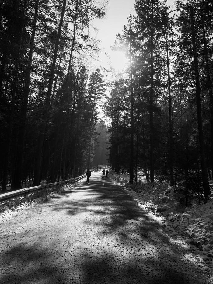 Просто фотка со Столбов. Фотография, Черно-Белое фото, Лес, Красноярские столбы, Дорога, Прогулка