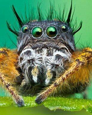 Макросьёмка паучков. Не такие они и страшные. Я бы сказал - даже забавные. Макросъемка, Паук, Симпатичные, Длиннопост