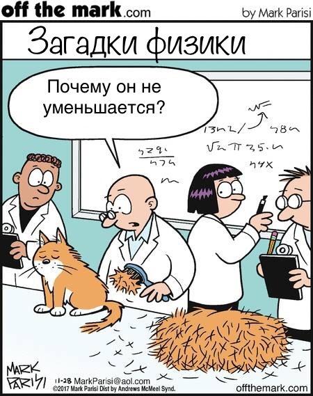 Великая тайна кота