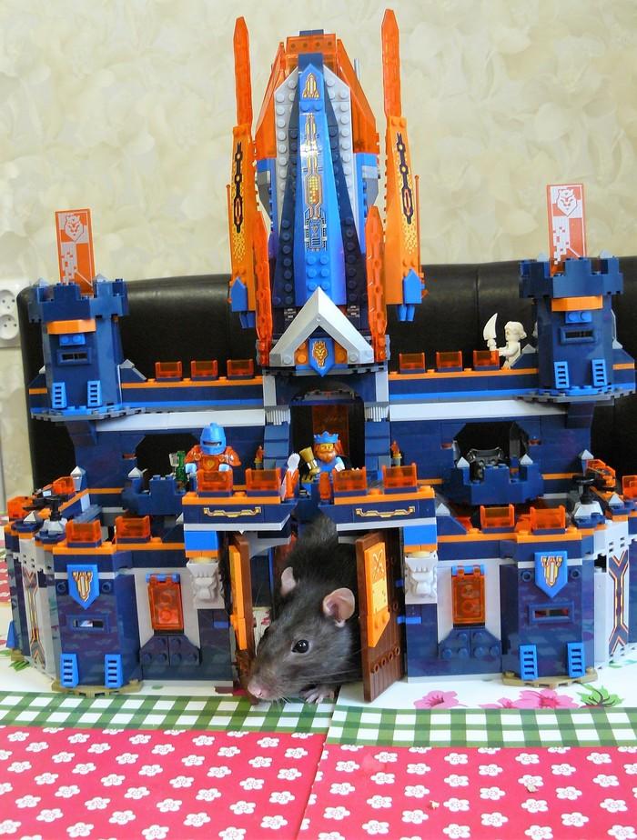 Усатый страж Крыса, Грызуны, LEGO, Замок, Король, Рыцарь, Усач-Носач