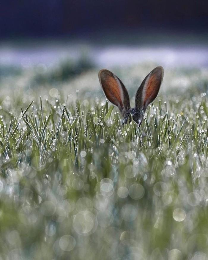 Зайца не видели?