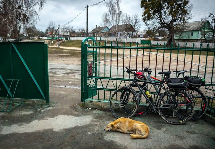 """Собака, """"которая в прошлой жизни была велосипедисткой(ом)"""" Собака, Велосипед, Велосипедист, Удивительное, Длиннопост"""