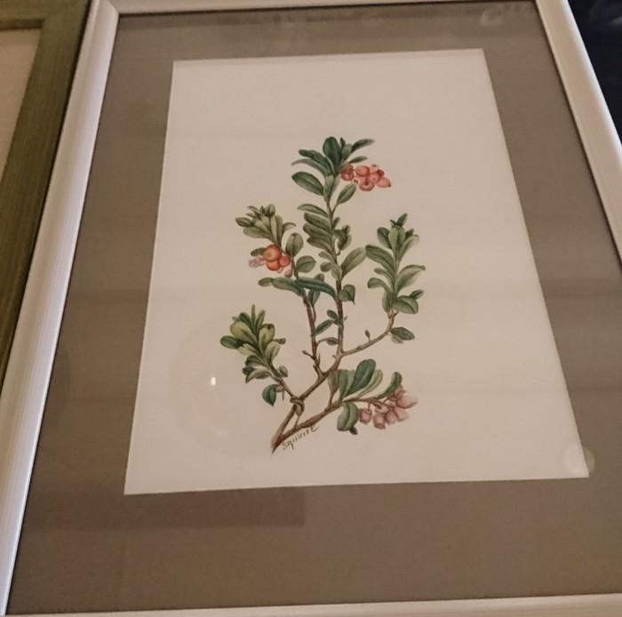 Подарки родителям Арт, Рисунок карандашом, Грибы, Брусника, Длиннопост, Ботаническая иллюстрация, Рисунок, Цветные карандаши