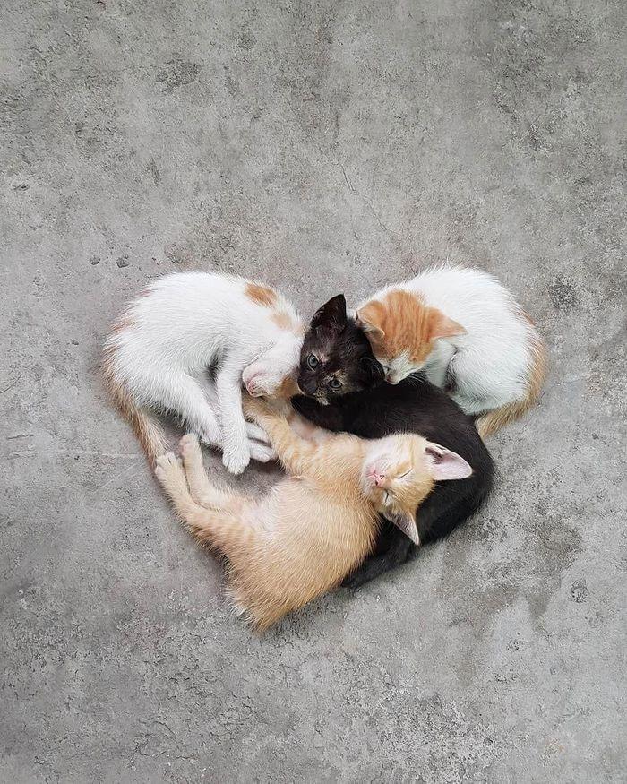 Немного котиков в ленту Кот, Хорошее настроение, Котята, Длиннопост, Домашние животные