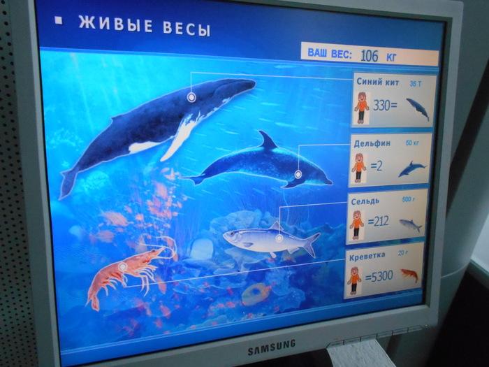 Живые весы Музей мирового океана, Весы, Вес
