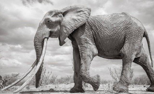 Просто шестидесятилетний слон