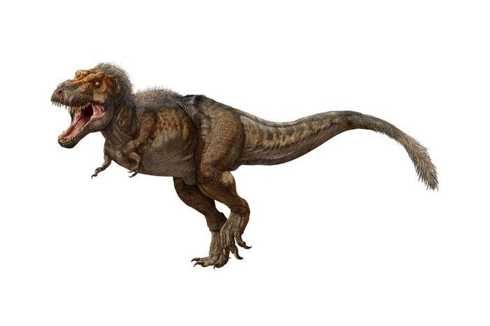 Как выглядели детеныши тираннозавра рекса Палеонтология, Динозавры, Тираннозавр, Детеныш, Внешний вид, Видео, Гифка, Длиннопост