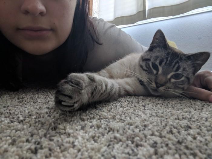 Кровать для котэ Кот, Домашние животные, Кровать, Длиннопост, Поделки