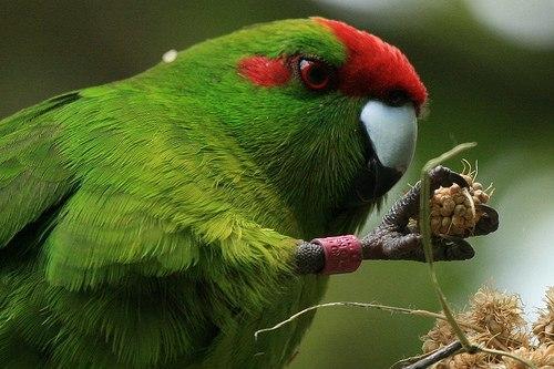 На что способны попугаи? Птичий разум. Птицы, Животные, Попугай, Зоопсихология, Интеллект животных, Интересное, Видео, Длиннопост