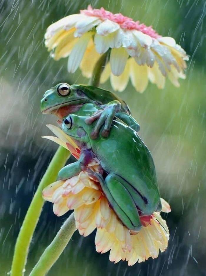 Парочка под дождём