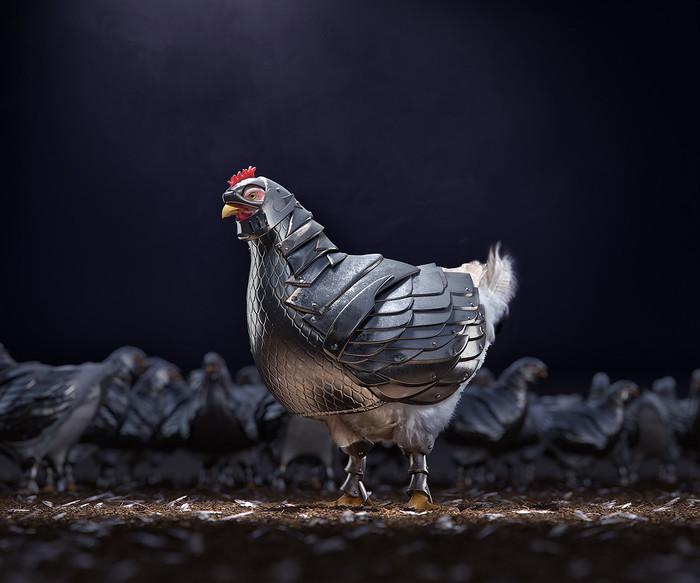 Курицы заклевали лисицу o_O Животные, Птицы, Курица, Лиса, Франция