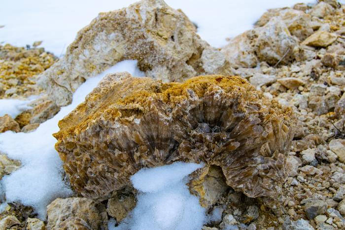 Минералы и окаменелости, которые можно встретить в карьерах Самарской области Самарская область, Минералы, Окаменелости, Длиннопост