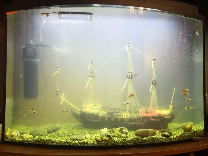 Первые шаги в аквариумистике Аквариумистика, Гуппи, Аквариум, Хобби, Отдых, Релакс, Длиннопост
