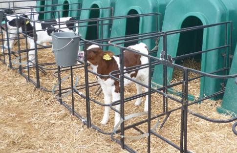 Производство деликатесной телятины как идея для бизнеса Откорм бычков, Ферма, Миниферма, Начинающий фермер, Семейная ферма, Бизнес-Идея, Длиннопост
