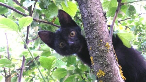 Как у кот выбрал человека Кот, Питомец, Длиннопост, Домашние животные