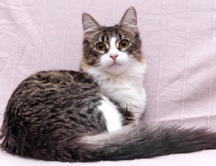 Каждому котёнку нужен дом! В добрые руки, Помощь, Кот, Доброта, Милота, Длиннопост, Домашние животные