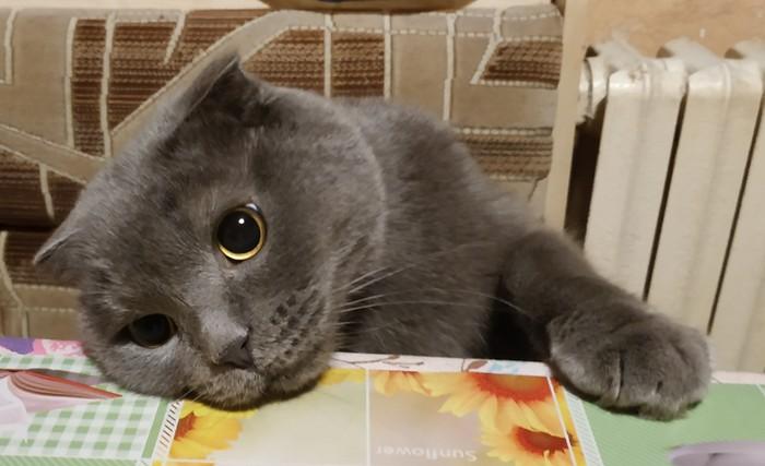Ах, пятница! Кот, Пятница, Выходные, Длиннопост, Домашние животные