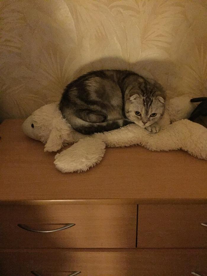 Д - доминирование Кот, Длиннопост, Домашние животные