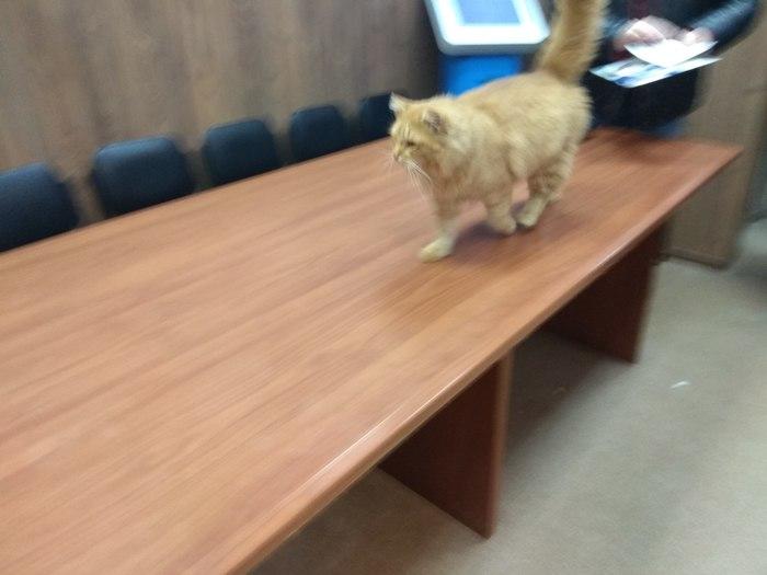 Кот паспортист Паспортный стол, Кот, Длиннопост