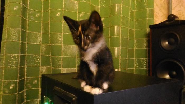 Молодая кошка ищет дом [нашла] Москва, Без рейтинга, Лига Добра, Помощь животным, Ищу дом, В добрые руки, Кот