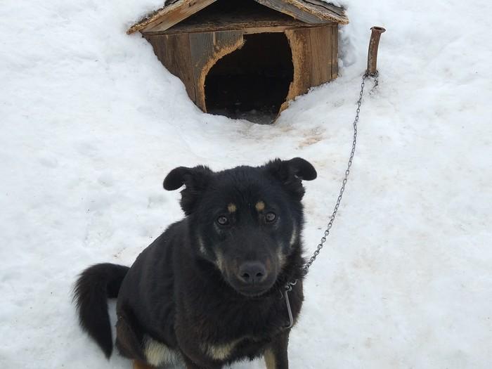 Ломать не строить Собака, Глупость, Вандализм, Не вандализм, Длиннопост, Домашние животные