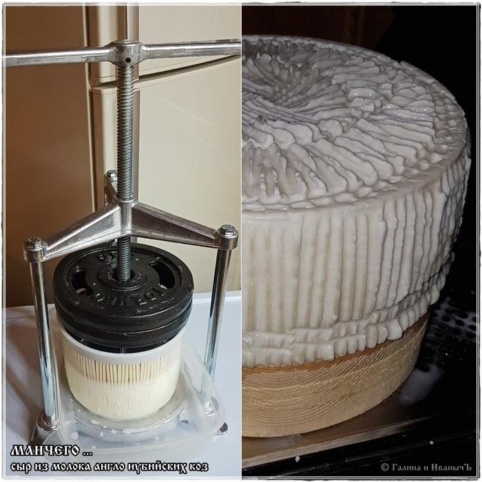 Манчего ... готовим сыр дома из молока англо Ð½ÑƒÐ±Ð¸Ð¹ÑÐºÐ¸Ñ ÐºÐ¾Ð· Сыр, Козий сыр, Сыр манчего, Еда, Рецепт, Длиннопост
