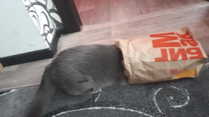 Где мой бургер ?? Кот, Голод, Домашние животные