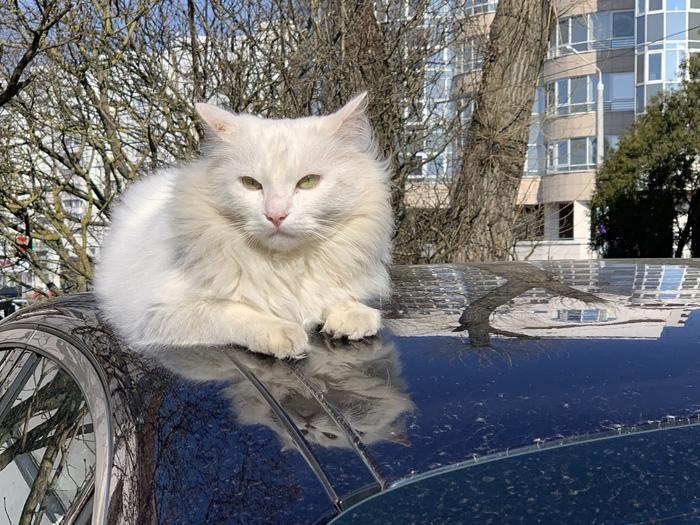 Минский кот