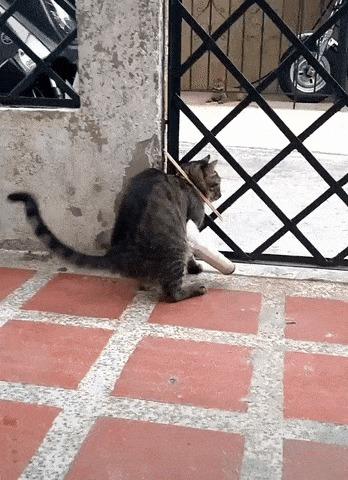 Нет, никуда ты гулять не пойдёшь Гифка, Кот, Лапа, Палочки, Домашние животные