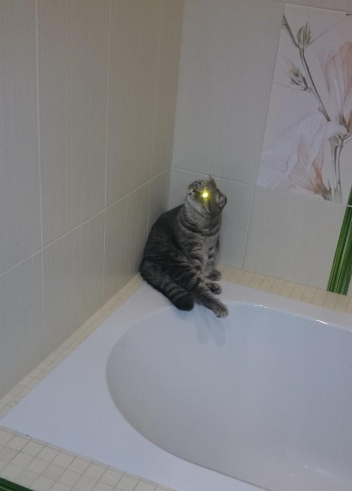 Ася, подсвети, а? Кот, Свет, Фары, Длиннопост, Домашние животные