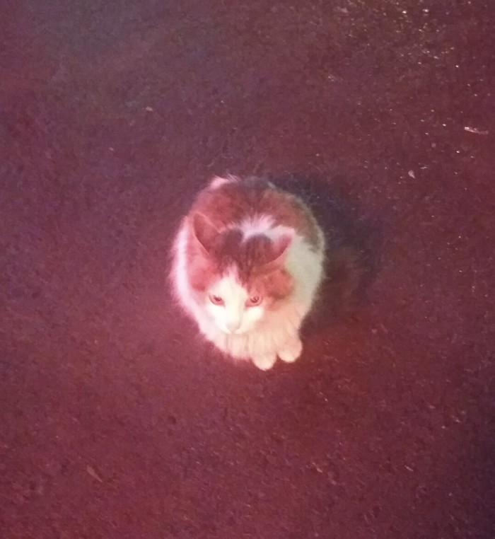 Просто уличный котик.