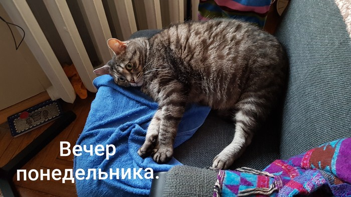 Когда впереди трудовая неделя... Кот, Кошачий тлен, Усталость