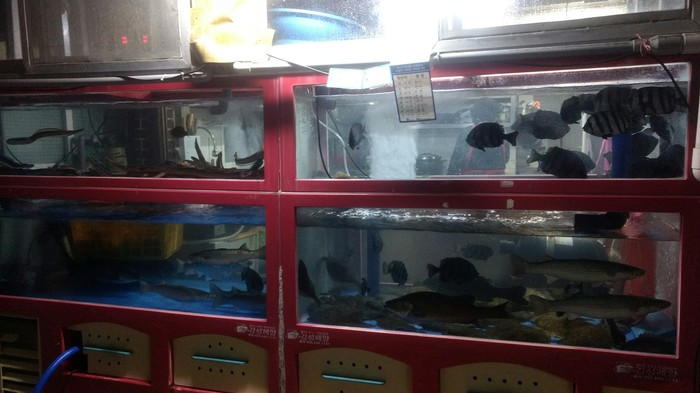 Южнокорейская кухня. Что и с чем едят. Южная Корея, Еда, Необычная еда, Рыба, Ресторан, Ужин, Длиннопост