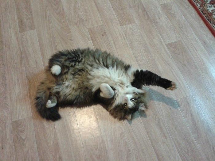Привет от котэ Кот, Привет от кота, Пушистый, Длиннопост