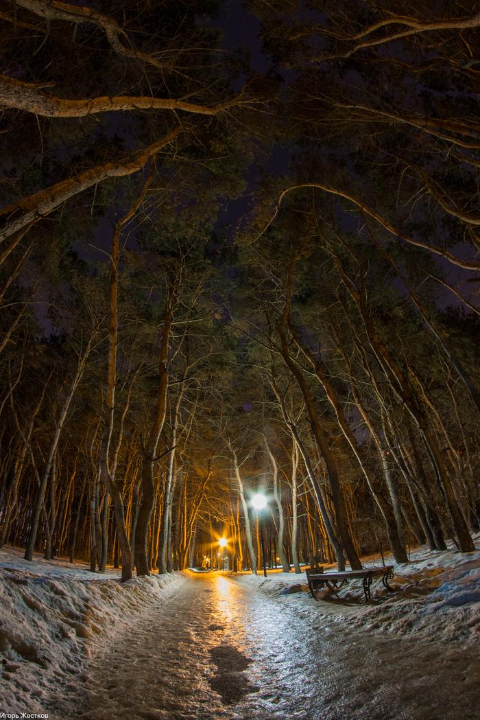 Фото в парке наfish-eye. Фотография, Фишай, Фотограф, Парк, Ночь, Весна