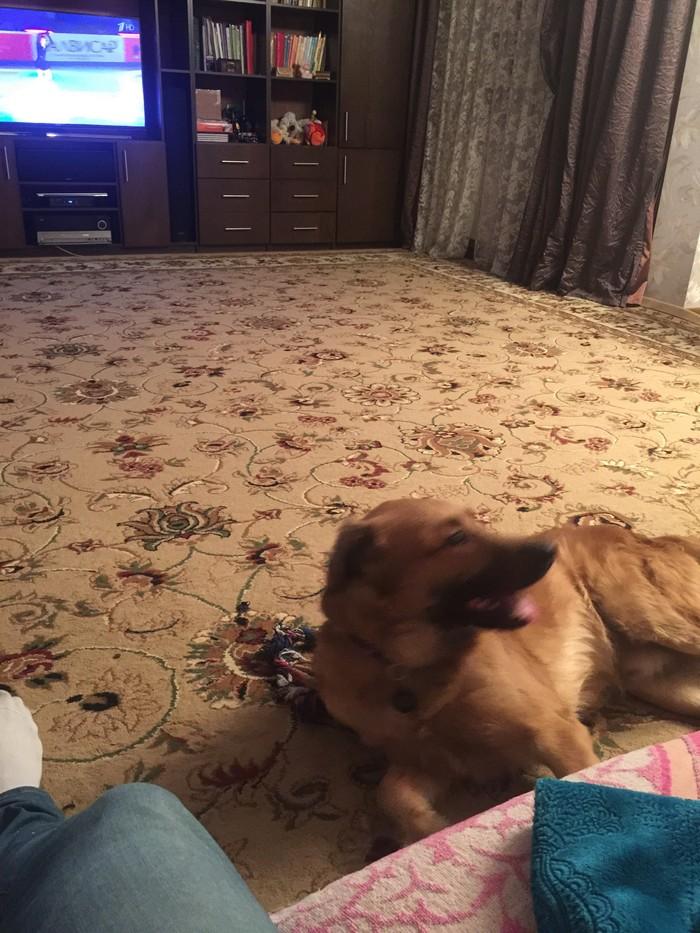 Прошло почти 2 года Собака, Для подписчиков, Длиннопост