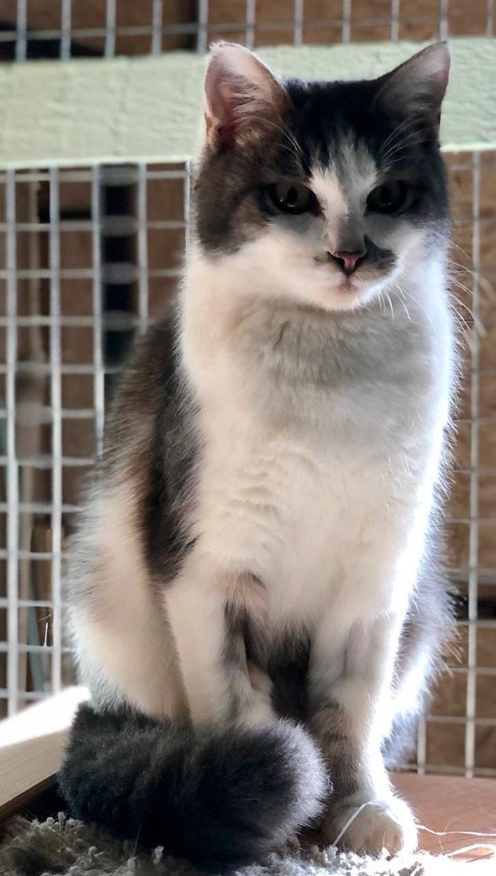 Кот в добрые руки!!! Кот, Москва, В добрые руки, Длиннопост, Без рейтинга, Передержка