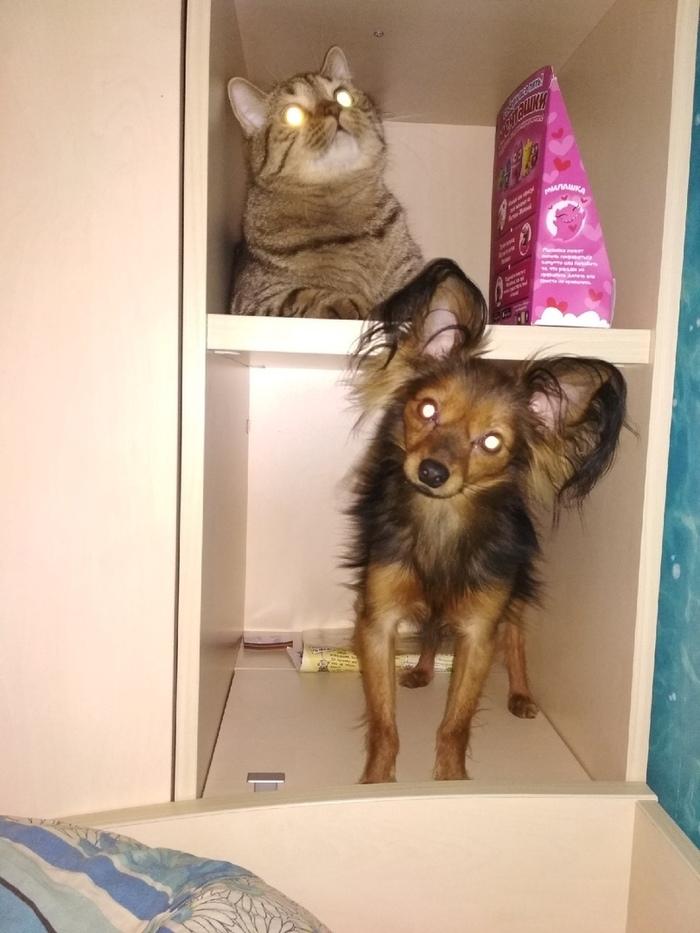 История Кеши, Тиши и Кузи Длиннопост, Кот, Собака, Животные, Домашние животные