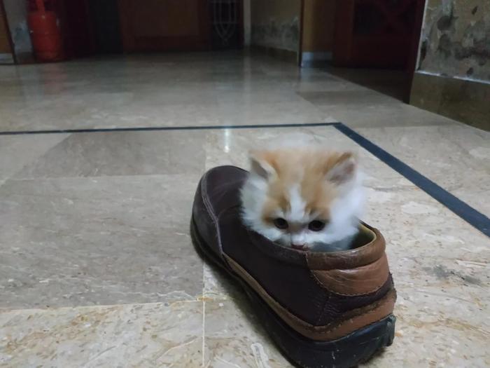 Он пришёл сегодня в наш офис и сразу же поселился в моём ботинке.