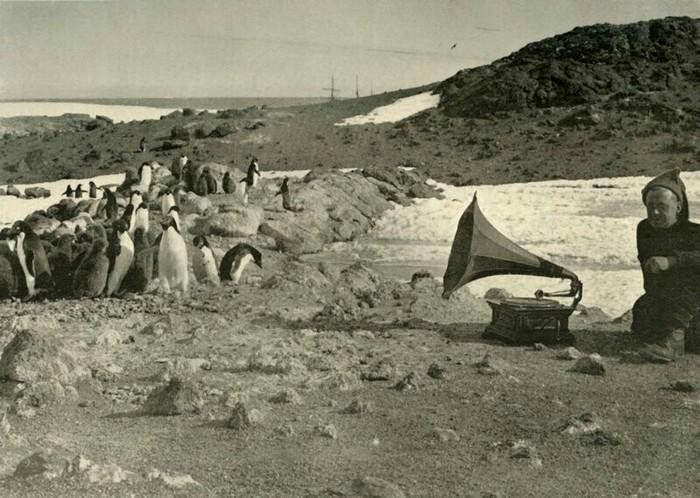 Редкие ретро - фотографии Антарктических экспедиций. Ретро, Старое фото, Историческое фото, Экспедиции, Черно-Белое фото, Длиннопост