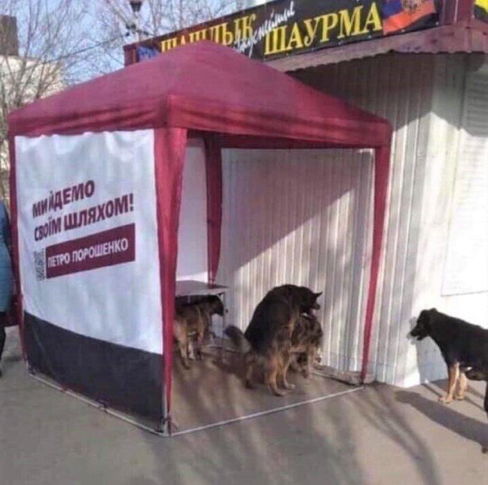 Любви в каждую палатку Украина, Выборы, Бродячие собаки, Порошенко