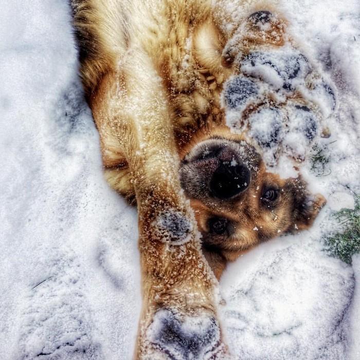 Фоткай меня, я позирую Собаки и люди, Собака, Немецкая овчарка, Фотография, Любовь, Домашние животные